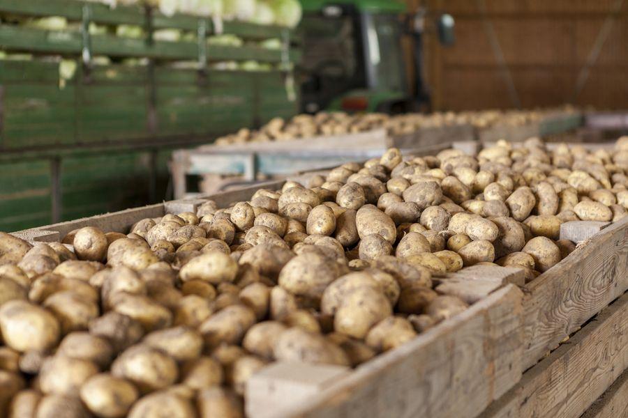 bio zemiaky-ekofarma važec-uskladnenie